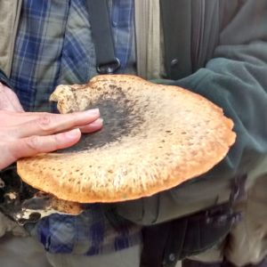 Dryad Saddle (Kerry Morrison)