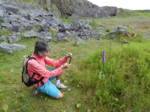 Sonia photographing Southern Marsh Orchid (Will Rich)