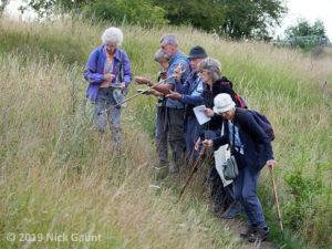 Examining calcareous grassland