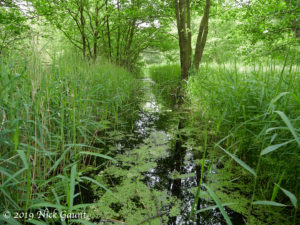 Mediaeval ditch, Askham Bog