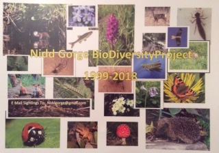 NGBDP - Poster 01052017